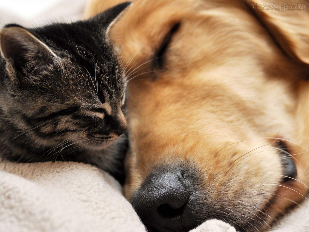 animais domesticos ser mae - PODE SER PROBLEMA DE CORAÇÃO?