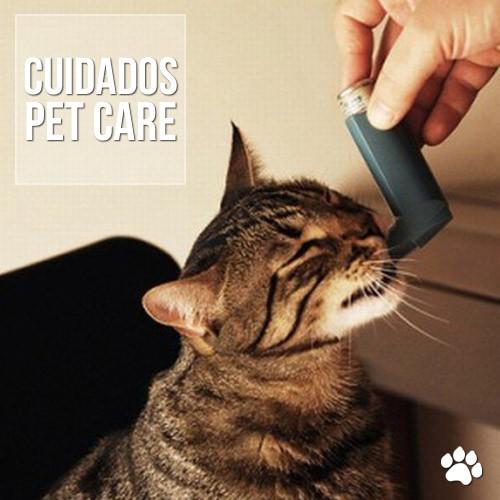asma em gatos - Asma em gatos