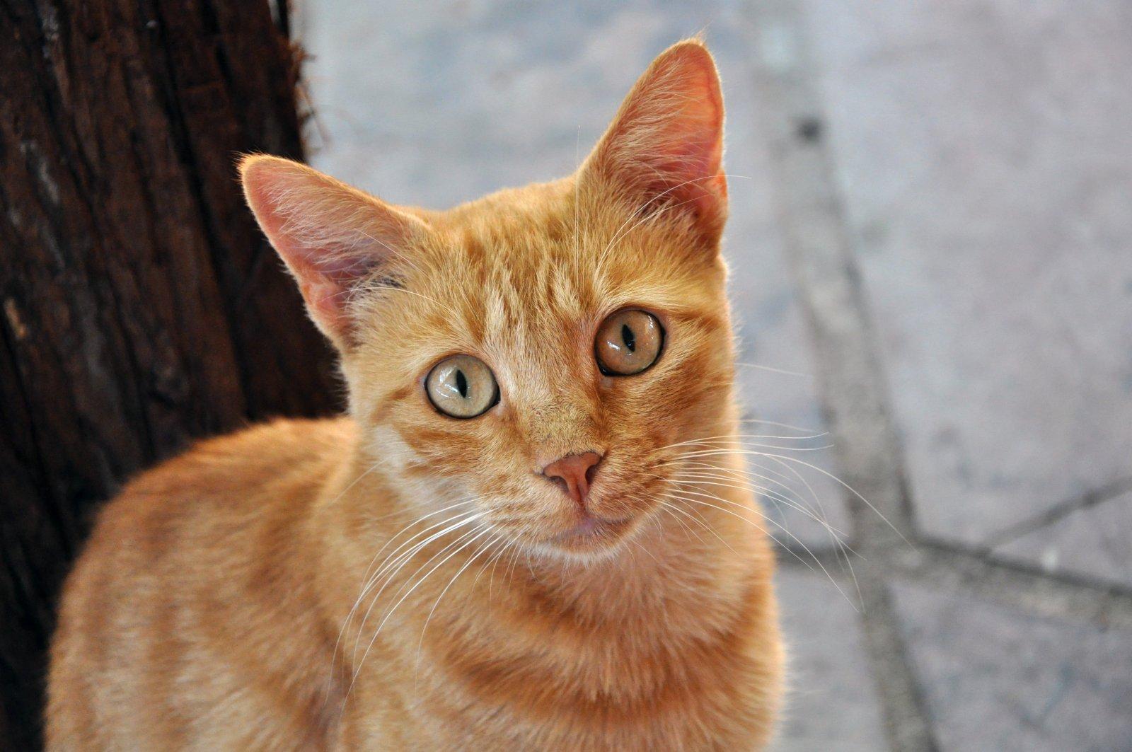 castigos para gatos - Toxoplasmose | A mulher grávida deve se desfazer do seu gato?