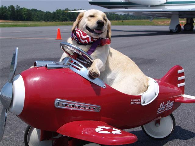 fudimg43fb563bg4pdz182h9 - Vou viajar de avião, posso levar meu animal?