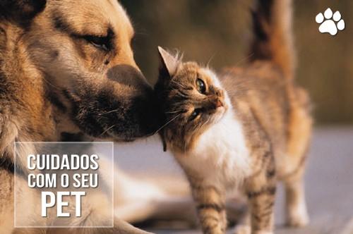 petcare2 - CISTO SEBÁCEO em cães e gatos