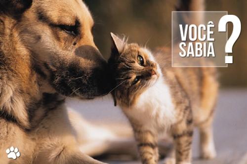 petcare5 - Como Resolver o Pelo Embolado no Cão e no Gato?