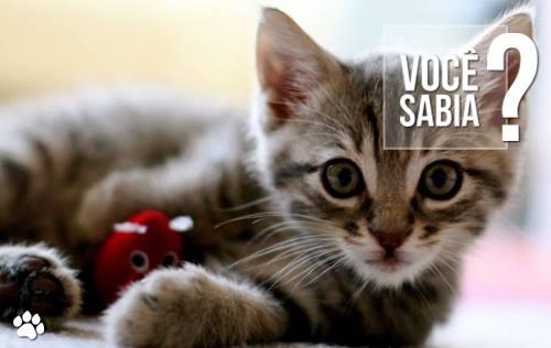 1380243 618245761560582 398865468 n - Você sabe o que o gato quer dizer quando lambe a gente?