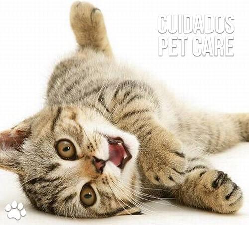 cuidados pet care 2 - Cat Friendly Practice