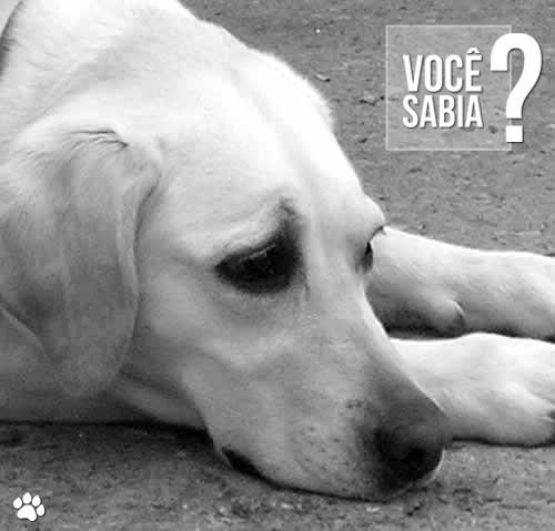oim hgh - De uma maneira geral, a partir de que idade os cães começam a apresentar sinais de envelhecimento?