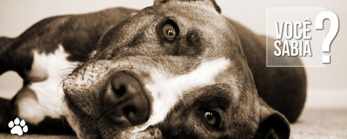 petcare1 - É natural que cães idosos sejam menos ativos? Por que isso acontece?