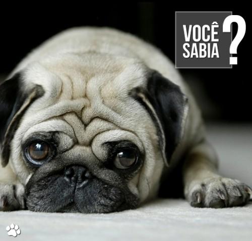 """petcare3 2 - Quais são as consequências do """"sedentarismo"""" causado pelo envelhecimento nos cães?"""