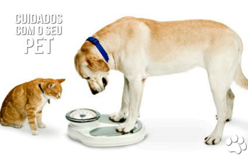 petcareoi - Cães, gatos e o sedentarismo