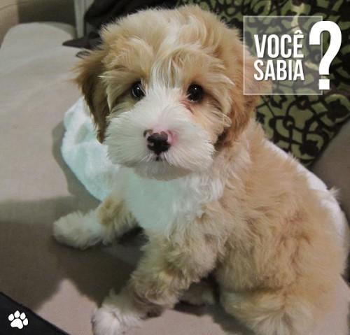 rree - O que o dono pode fazer para motivar seu cão na hora de fazer atividades?