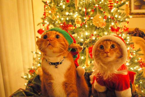 1455160 364705487008418 1981606323 n - Festas de Natal e Ano Novo? Dicas e cuidados com seu pet!