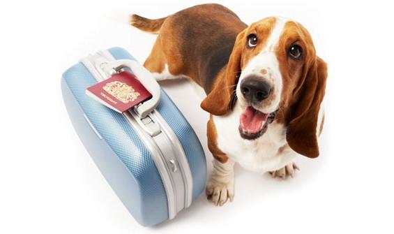 animais viajando - DICAS PARA QUEM VAI DEIXAR O  SEU ANIMAL EM HOTEL NO FINAL DE ANO