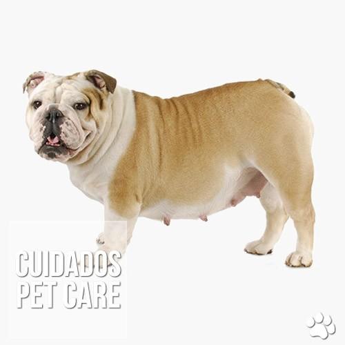 cuidados - Quando é necessário recorrer a uma cesariana em cadelas?