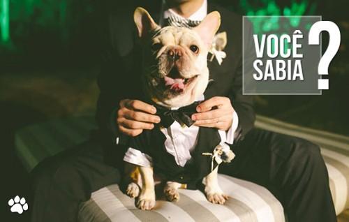 petcare125 - Cães Wedding: Pets participam do grande dia!