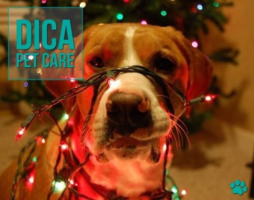 petcare214 - Fique alerta com cães e gatos na época das Festas!