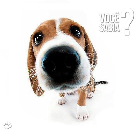 petcare345 - Nariz ressecado em cães: Nariz seco e sem brilho