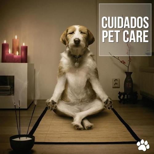 pets castrados podem ficar mais calmos - Pets castrados podem ficar mais calmos?