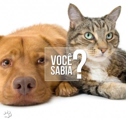 1382823 614821501903008 2030085168 n1 - Doenças transmitidas por pássaros para cães e gatos