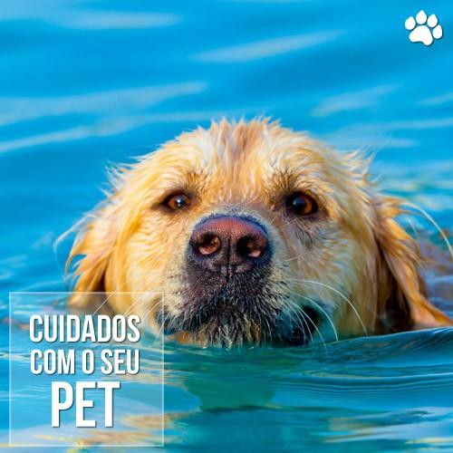 mitos verdades e cuidados com o seu cao no verao - Mitos, verdades e cuidados com o seu cão no verão