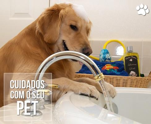 petcare3 - O calor é prejudicial ao seu cão