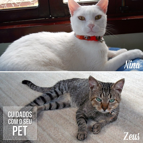 zeus e nina portadores de aids felina - Zeus e Nina: Portadores de AIDS Felina