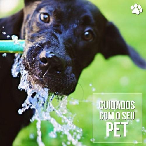 cuidados pet - Dicas e Cuidados com os cães no verão