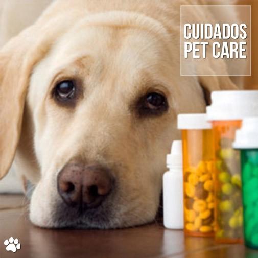 cuidados pet1 - Quais medicamentos são proibidos para os cães?