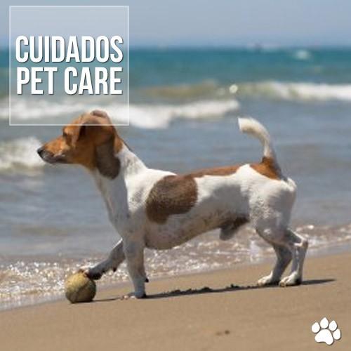 cuidados - Obstrução intestinal em cães por coquinho