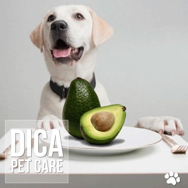 dica - Cães obesos por causa do abacate