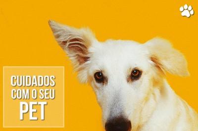 feridas nas orelhas de caes e gatos - Feridas nas orelhas de cães e gatos