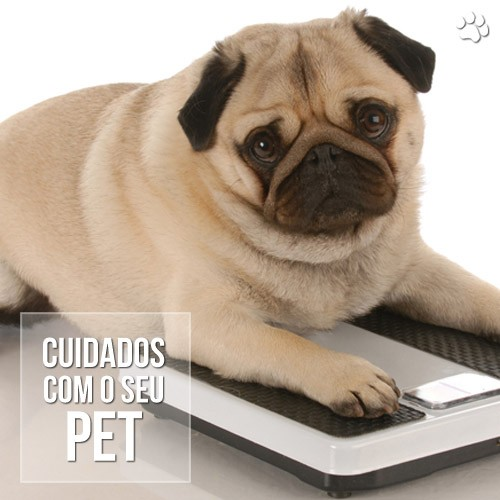 obesidade em caes - Estilo de vida sedentário leva cães e gatos à obesidade