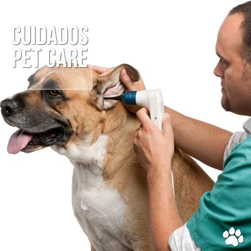 otite em caes de gatos - A Dirofilariose ou Doença do verme do Coração