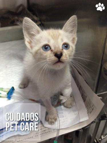 petcare - Diarreia em filhotes de Gato