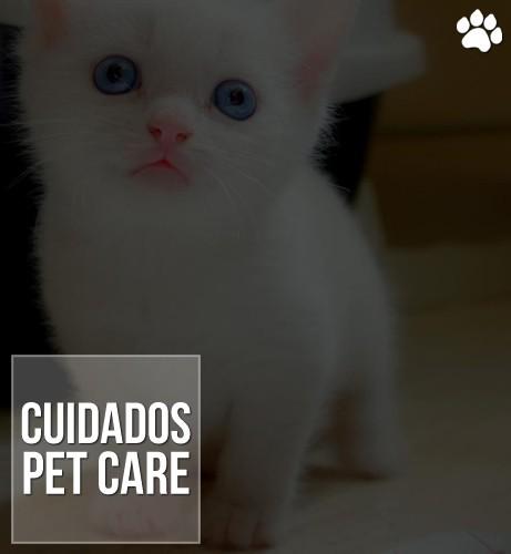 primeiros cuidados com filhotes de gato - Primeiros cuidados com filhotes de gato