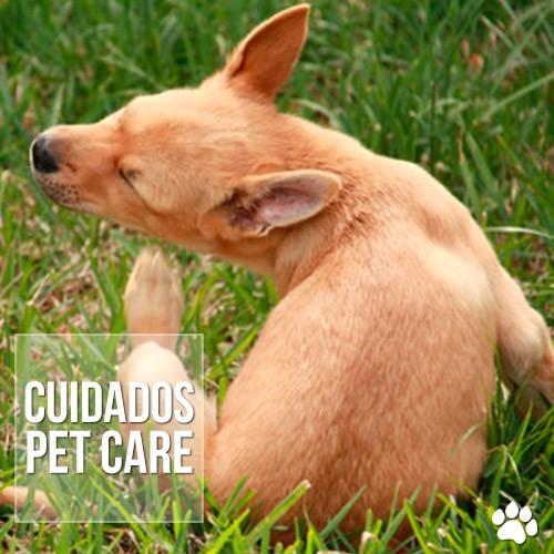 como combater carrapatos do cachorro 22 - Carrapatos: Como tratar o problema?