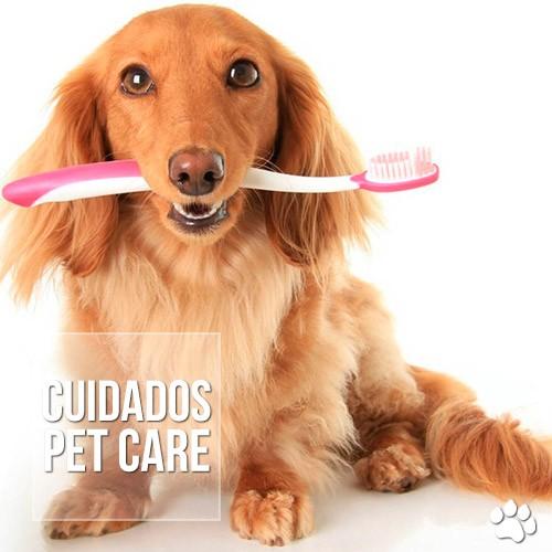 cuidados 2 - Como devo escovar os dentes do meu cão ou gato?