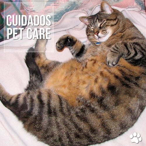"""cuidados - Meu """"gato gordo"""" parou de comer. É grave?"""