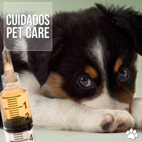 cuidados1 - Dúvidas sobre vacinação de filhotes de cães