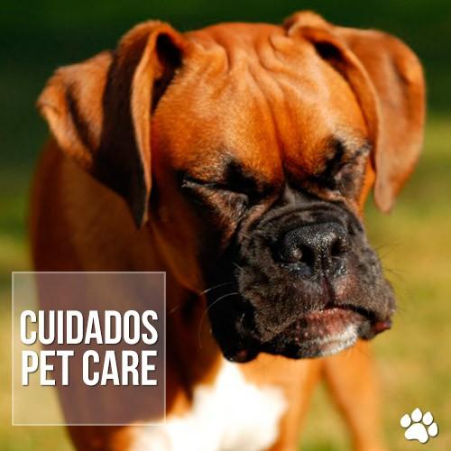 cuidados2 - Espirro reverso em cães