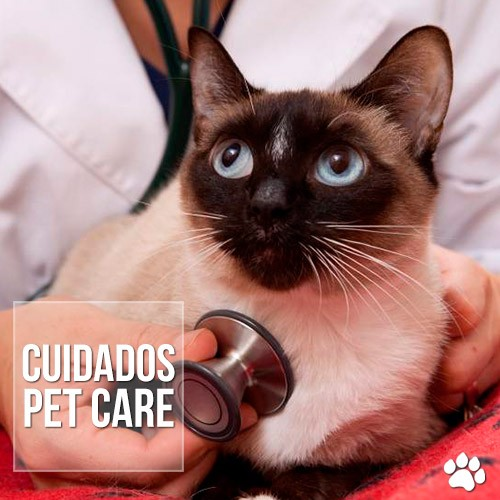cuidados4 - Leucemia em cães e gatos