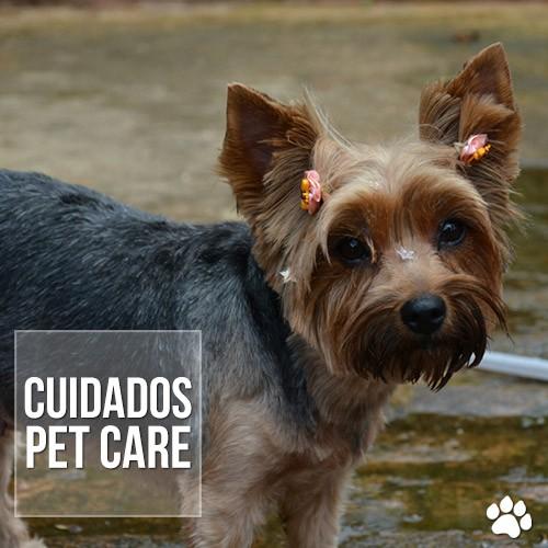 cuidados5 - Dia de banho para os pets