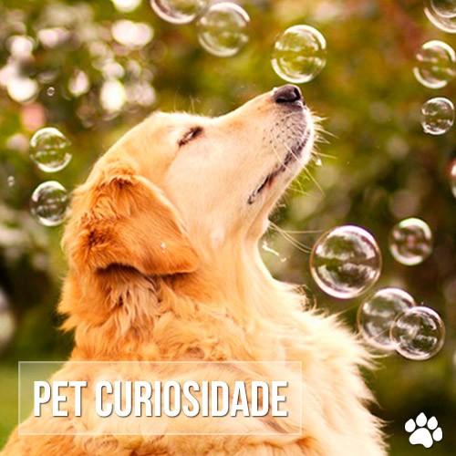 cuidad8os - O cão mais feliz do mundo
