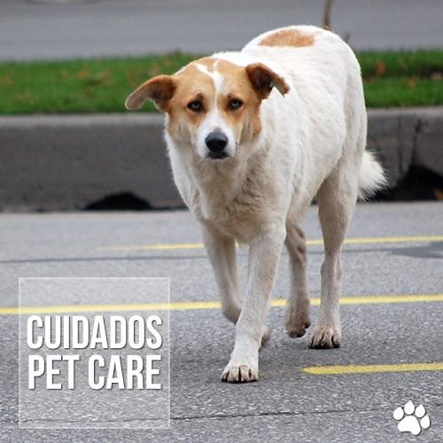 cuidado3s - Primeiros cuidados com animais de rua adotados