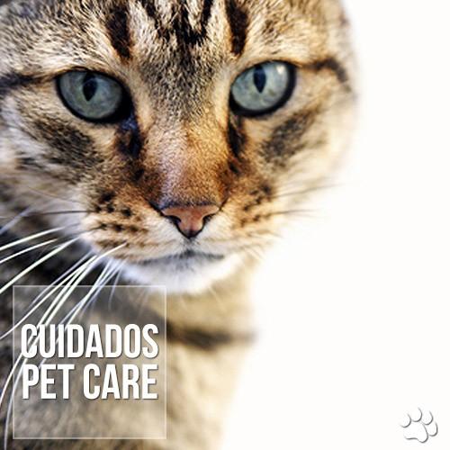 cuidado9s - Hipertireoidismo em gatos idosos