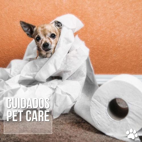 cuidados - Diarreia crônica em cães e gatos pode ser Giárdia?