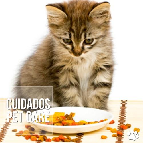 cuidados1 - Qual é a alimentação indicada para os gatos?