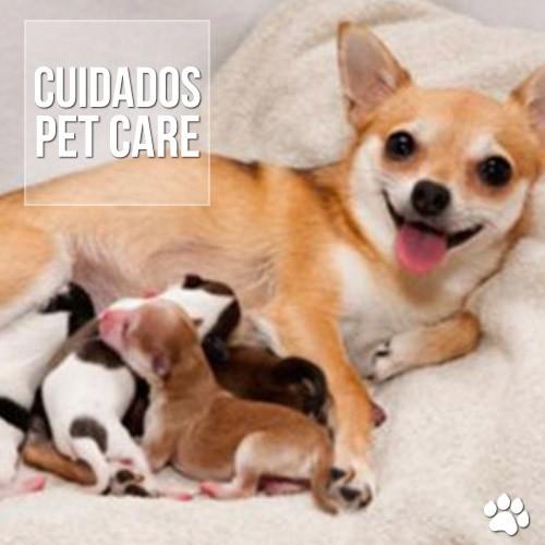 cuidados3 - Problemas no parto de cadelas e gatas