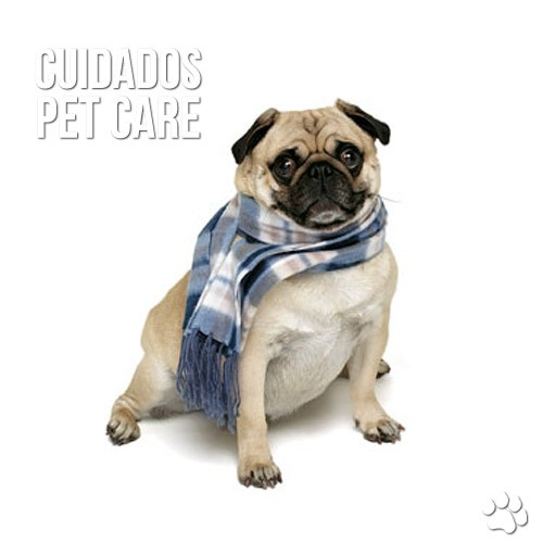 cuidados4 - Meu cão está tossindo muito, o que fazer?