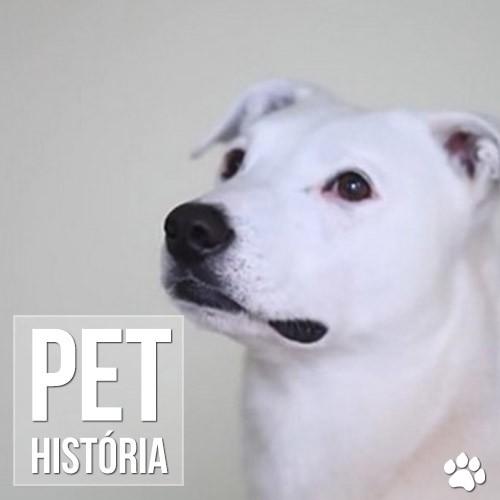 historia - Cão surdo aprende língua de sinais e recomeça a vida
