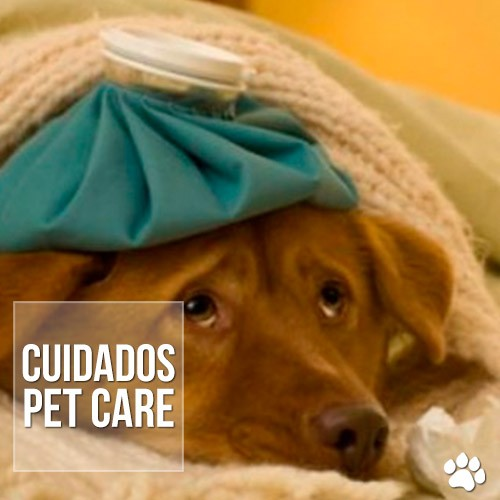 timthumb - Tempo seco pode prejudicar a saúde dos pets