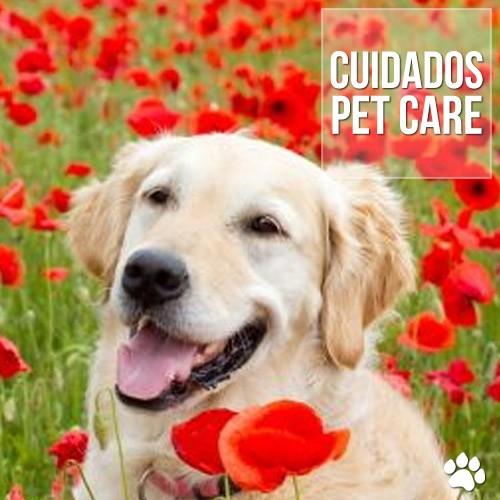 cuidadeos - Alergia Alimentar em cães